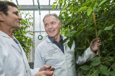 Professor Graham Farquhar standing with Peter Groeneveld in a glasshouse surrounded by plants. Image: StuartHay, ANU.